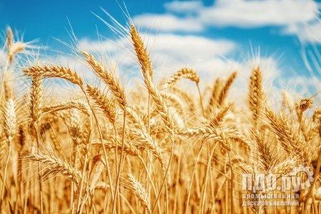 Азов элеваторы цены на пшеницу инспекционные ленточные транспортеры